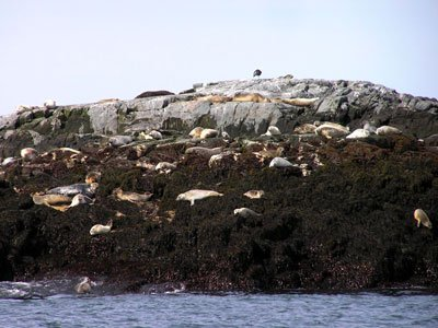 machias-seal-island-and-north-rock